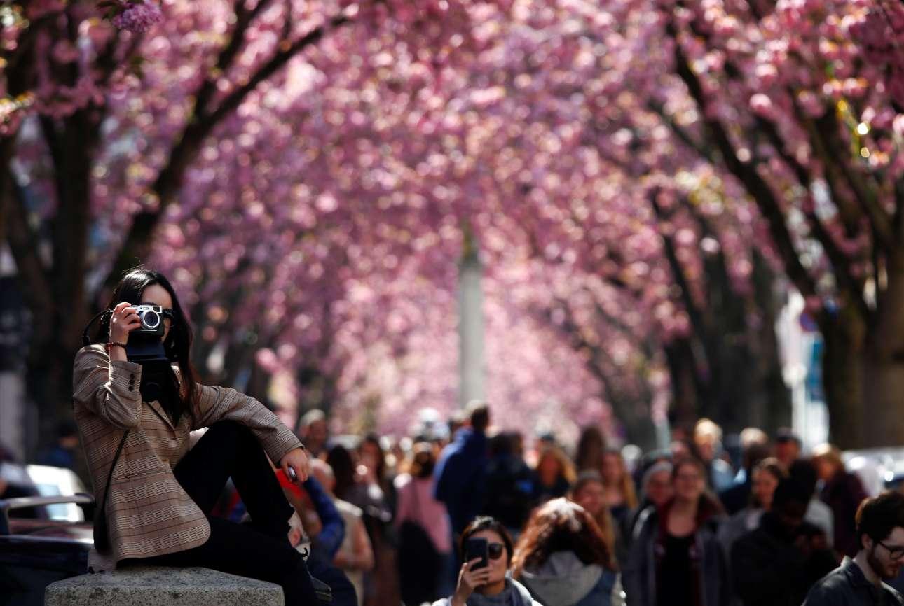 Παρασκευή, 12 Απριλίου, Γερμανία. Περαστικοί τραβούν φωτογραφίες στην περίφημη λεωφόρο με τις ανθισμένες κερασιές, στην Βόννη