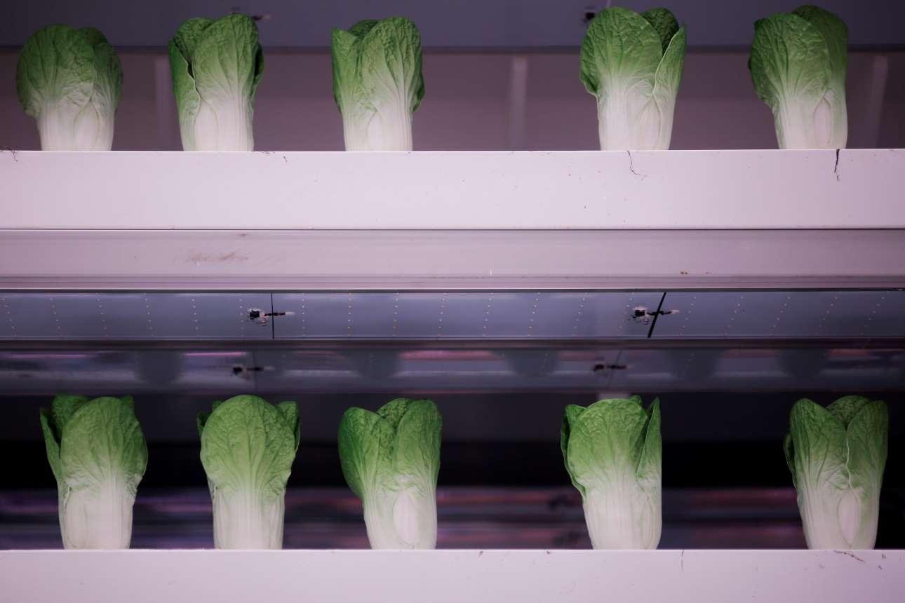 ...και ψεύτικα λαχανικά στα ράφια