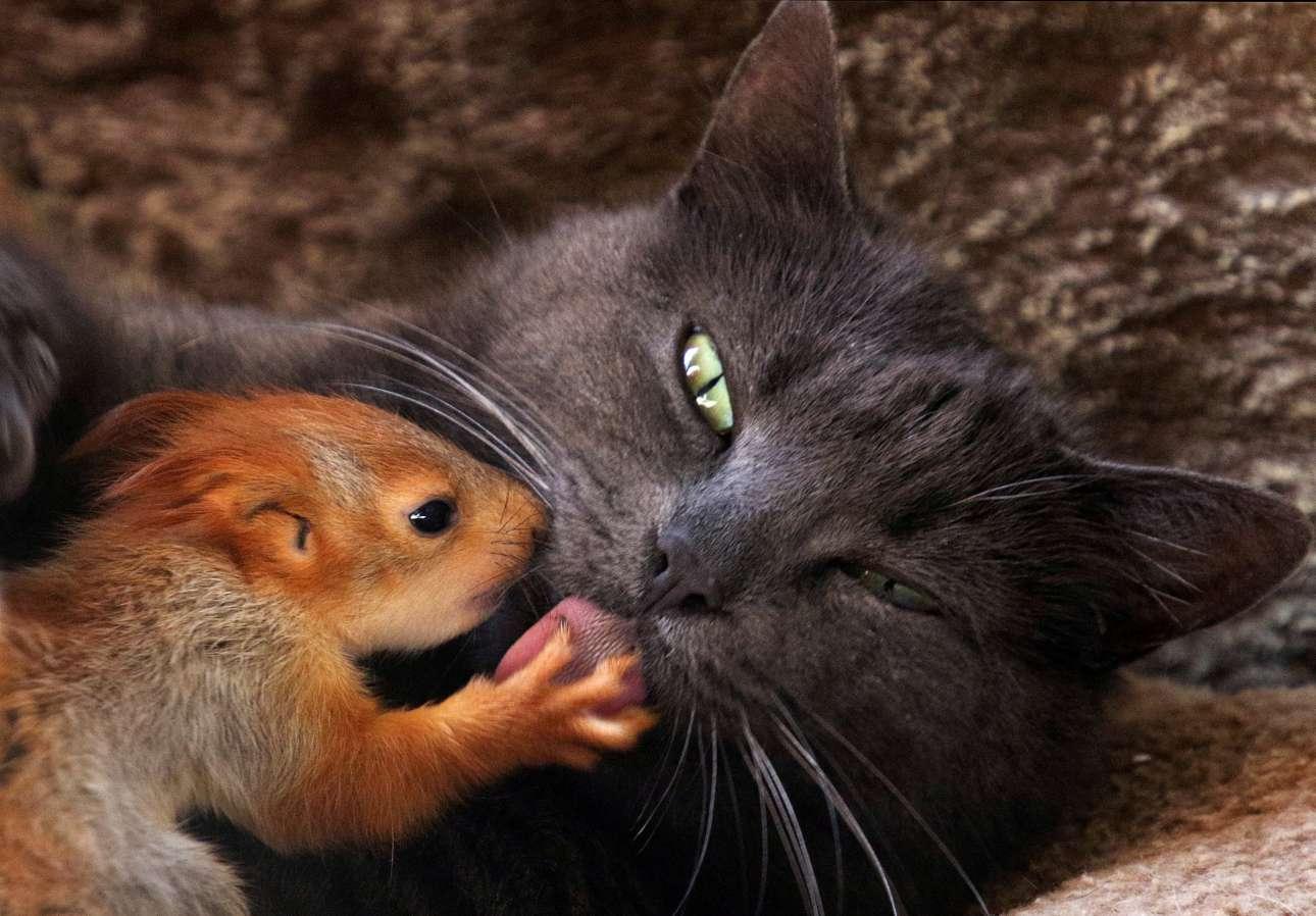 Μ. Πέμπτη, 25 Απριλίου, Κριμαία. Η Πασά η γάτα, φροντίζει έναν μικρό σκίουρο. Η περίπτωσή του έχει γίνει θέμα συζήτησης στο Μπακχισαράι, πόλη της κεντρικής Κριμαίας, καθώς έχει υιοθετήσει και ταΐζει τέσσερις ορφανούς σκίουρους