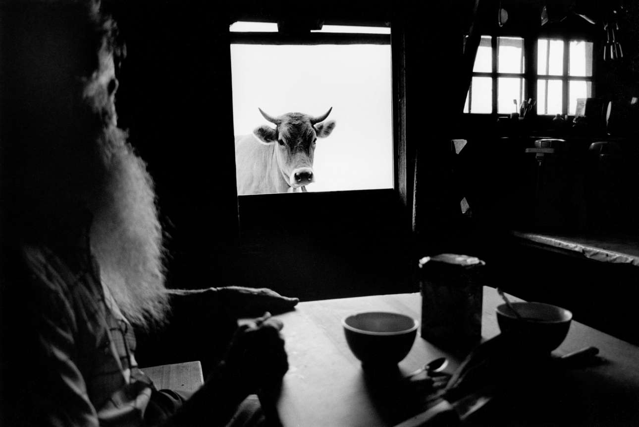 Ενας αγρότης πίνει καφέ σε υψόμετρο 1.800 μέτρων στις Ελβετικές Αλπεις ενώ μία αγελάδα τον παρατηρεί από το ανοιχτό παράθυρο της πόρτας