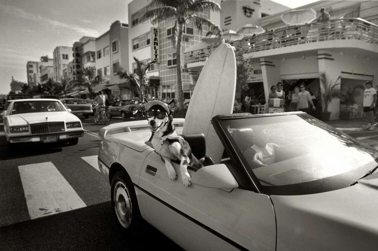 Βόλτα στη λεωφόρο Οσιαν Ντράιβ παρέα με έναν σκύλο με γυαλιά και μία σανίδα του σερφ, 1992