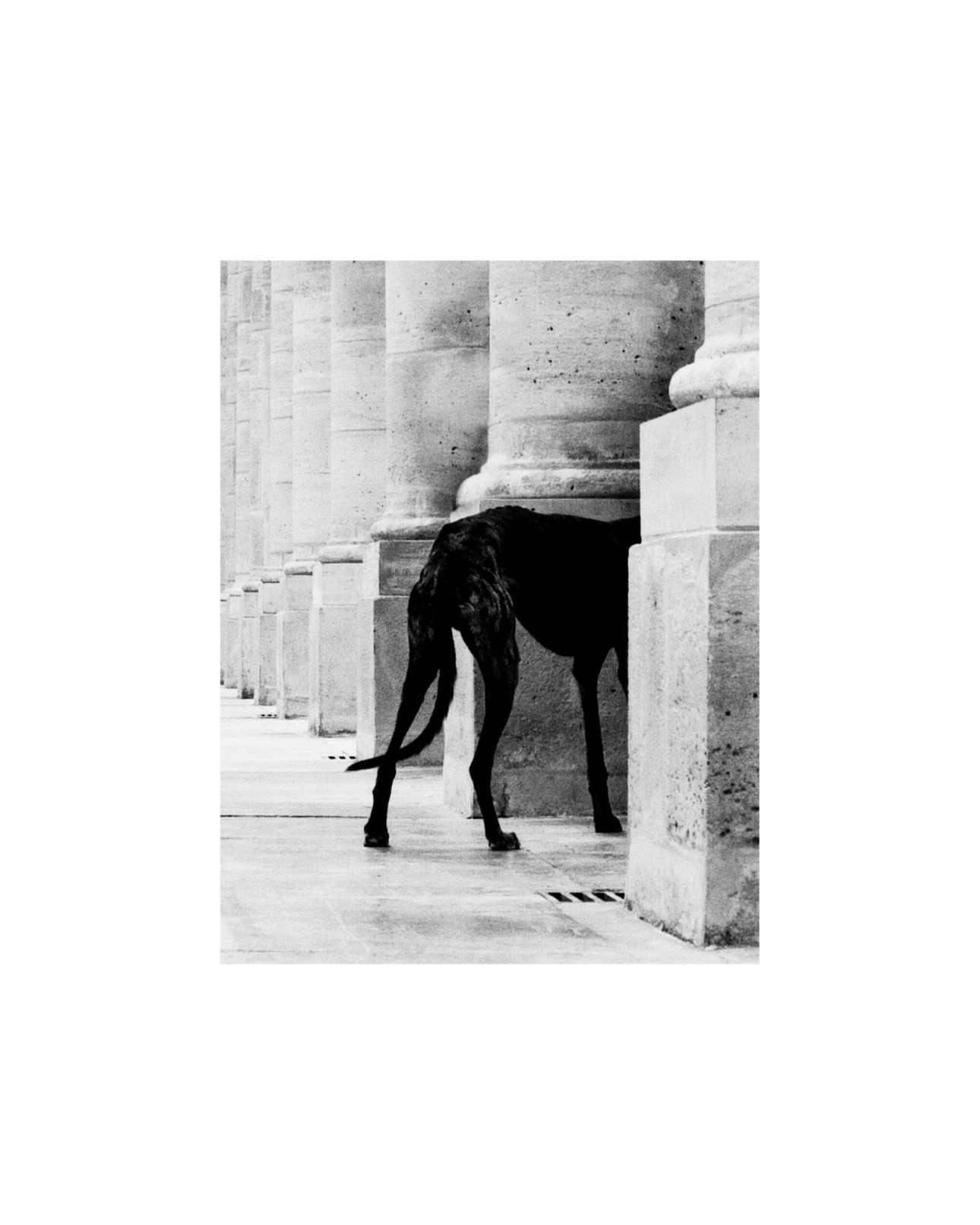 Ο πισινός ενός σκύλου στο Παρίσι