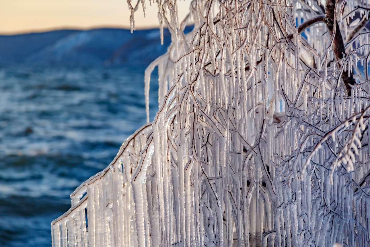 Κλαδιά δέντρου επικαλυμμένα με πάγο κοντά στην όχθη