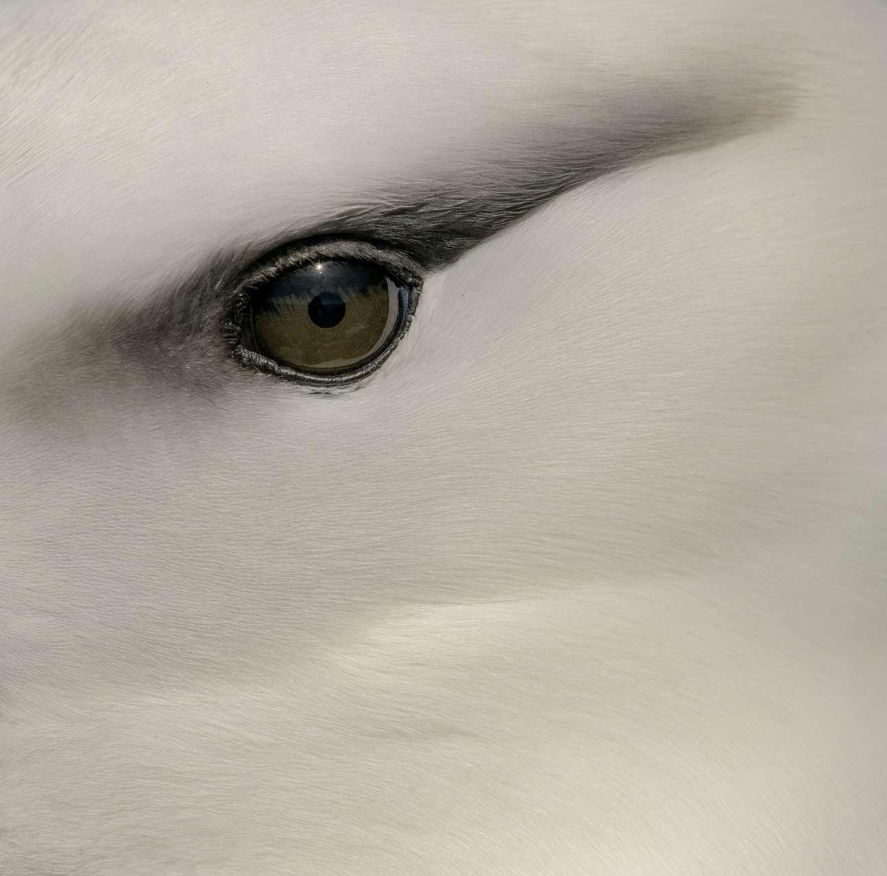 «Μαυροφρύδης άλμπατρος». Ο φωτογράφος παρατηρεί και αποτυπώνει την απλή, κομψή ομορφιά των ματιών των ενηλίκων πουλιών της ανοικτής θάλασσας σε ένα αφαιρετικό καρέ, στα νησιά Φόκλαντ