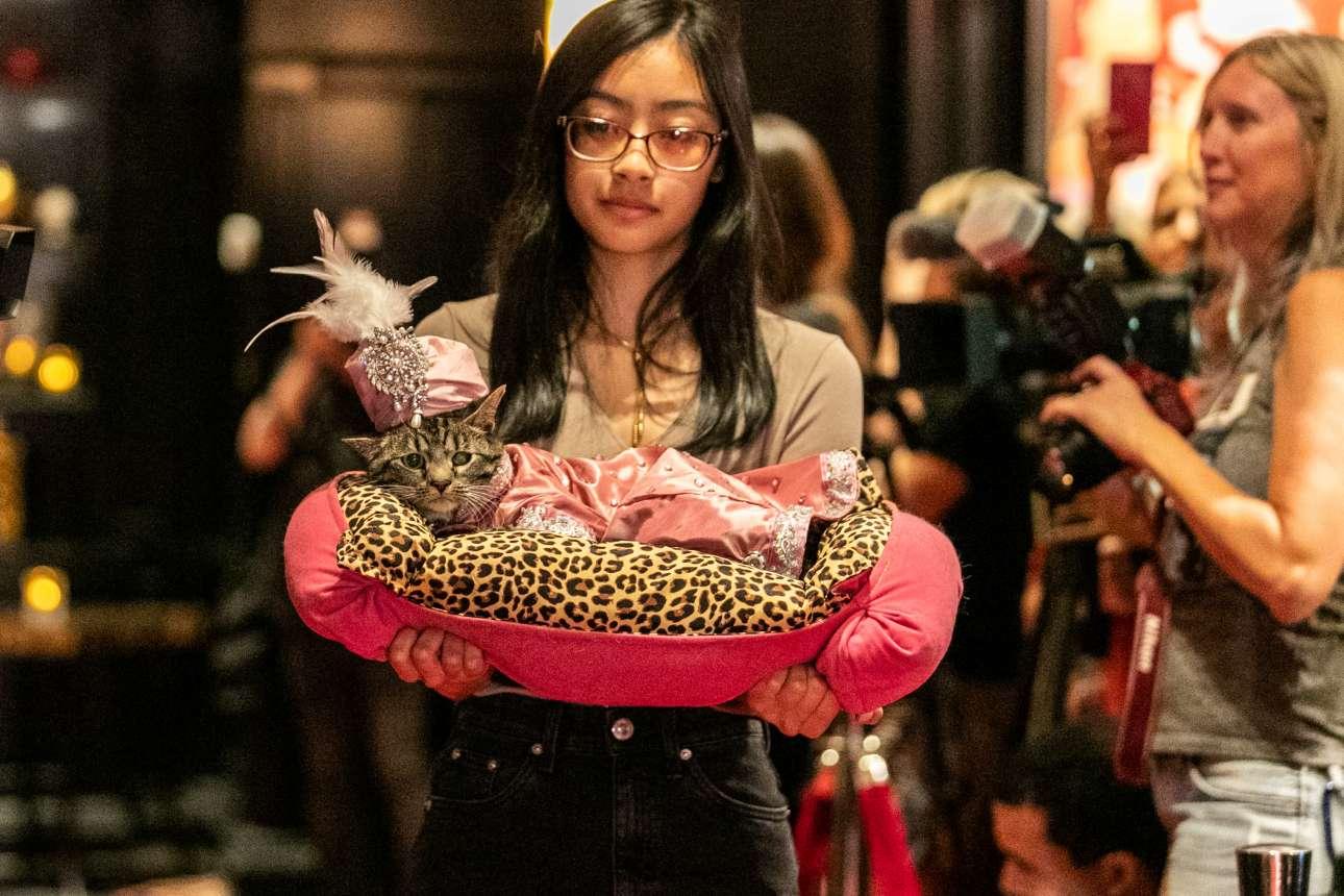 Η γατούλα Σάκι με το αγαπημένο της ροζ τουρμπάνι συμμετέχει στο Cat Fashion Show που διοργανώνεται στο ξενοδοχείο Algonquin του Μανχάταν (Νέα Υόρκη, ΗΠΑ)