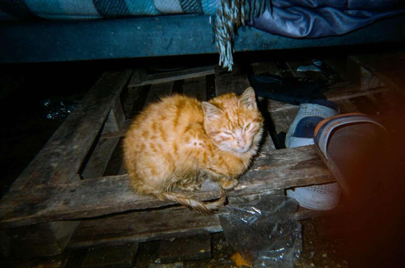 «Οι άνθρωποι στο στρατόπεδο πιστεύουν ότι οι γάτες τρώνε τους αρουραίους, αλλά οι γάτες φοβούνται τους αρουραίους γιατί είναι τόσο μεγάλοι!», Ζεϊνάμπ, 17 ετών