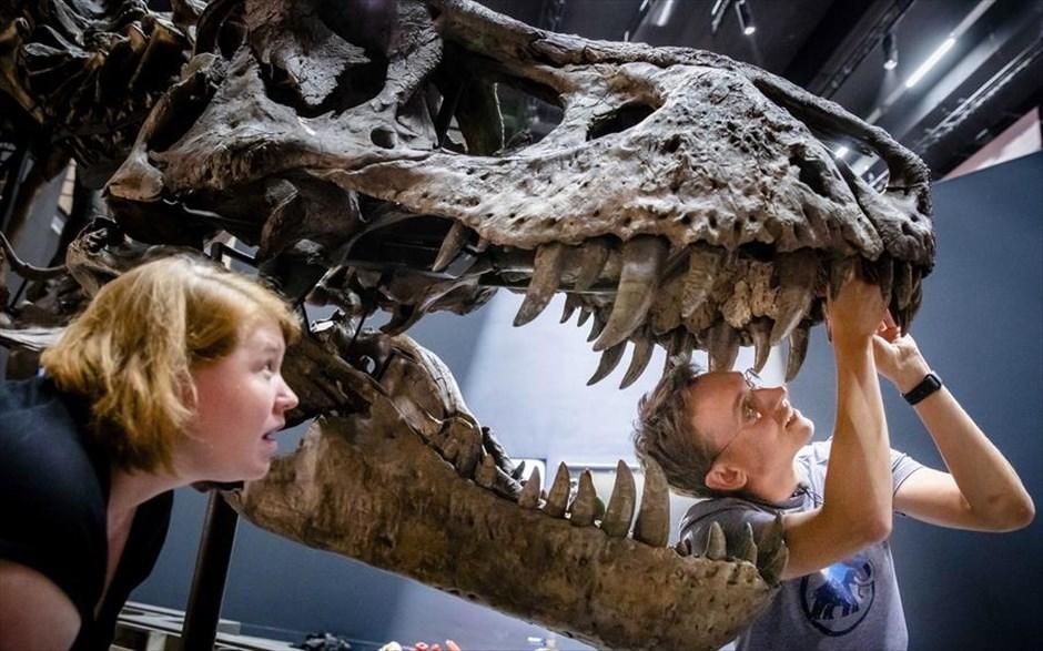 Μετά την κοπιαστική περιοδεία που διήρκεσε 3 ολόκληρα χρόνια, η Τριξ έφτασε στο καινούργιο της σπίτι στις νέες εγκαταστάσεις του Κέντρου Βιοποικιλότητας Naturalis στην πόλη Λέιντεν της Ολλανδίας. Η Τριξ είναι ένας θηλυκός Τυραννόσαυρος Ρεξ ηλικίας 66 εκατ. χρόνων και βρέθηκε σε ανασκαφές στη Μοντάνα το 2013. Εξαγοράστηκε από το Naturalis το 2014. Περιηγήθηκε σε αρκετές ευρωπαϊκές πόλεις συμπεριλαμβανομένων της Βαρκελώνης, του Παρισιού και του Σάλτσμπουργκ, με τελευταίο σταθμό τη Γλασκόβη, όμως τώρα ήρθε η ώρα να επιστρέψει στο σπίτι της για να υποδεχτεί τους επισκέπτες σαν καλή οικοδέσποινα