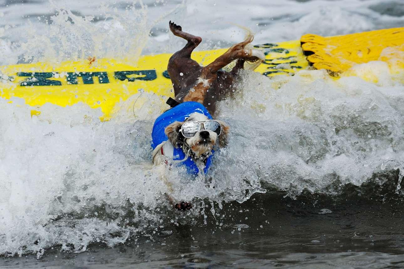 Μικρόσωμος αλλά αρκετά κουλ σκύλος συμμετέχει στη 14η διοργάνωση «Surf-A-Thon» στην Καλιφόρνια