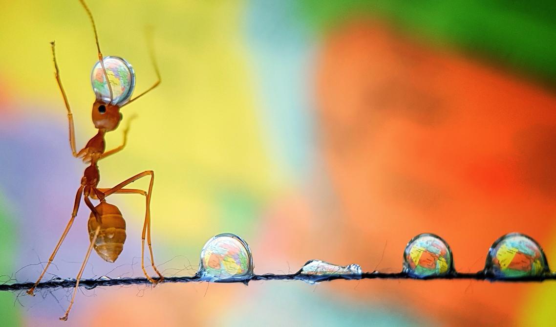 «Μυρμήγκι ισορροπεί τη Γη». Χρειάστηκαν τέσσερις ώρες για να καταφέρει η φωτογράφος να αιχμαλωτίσει αυτό το εντυπωσιακό καρέ, όπου ένα μυρμήγκι ισορροπώντας πάνω σε κλωστή κουβαλάει σταγόνες νερού, μέσα από τις οποίες αντανακλάται ένας χάρτης που βρίσκεται στο φόντο