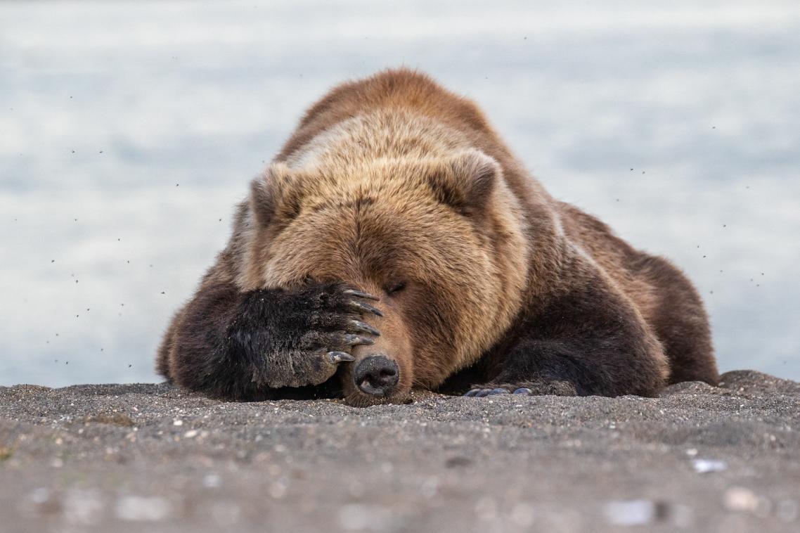 Μετά από μια δύσκολη μέρα στο γραφείο.. ή στην προκειμένη περίπτωση, μετά από πετυχημένο ψάρεμα στην Αλάσκα