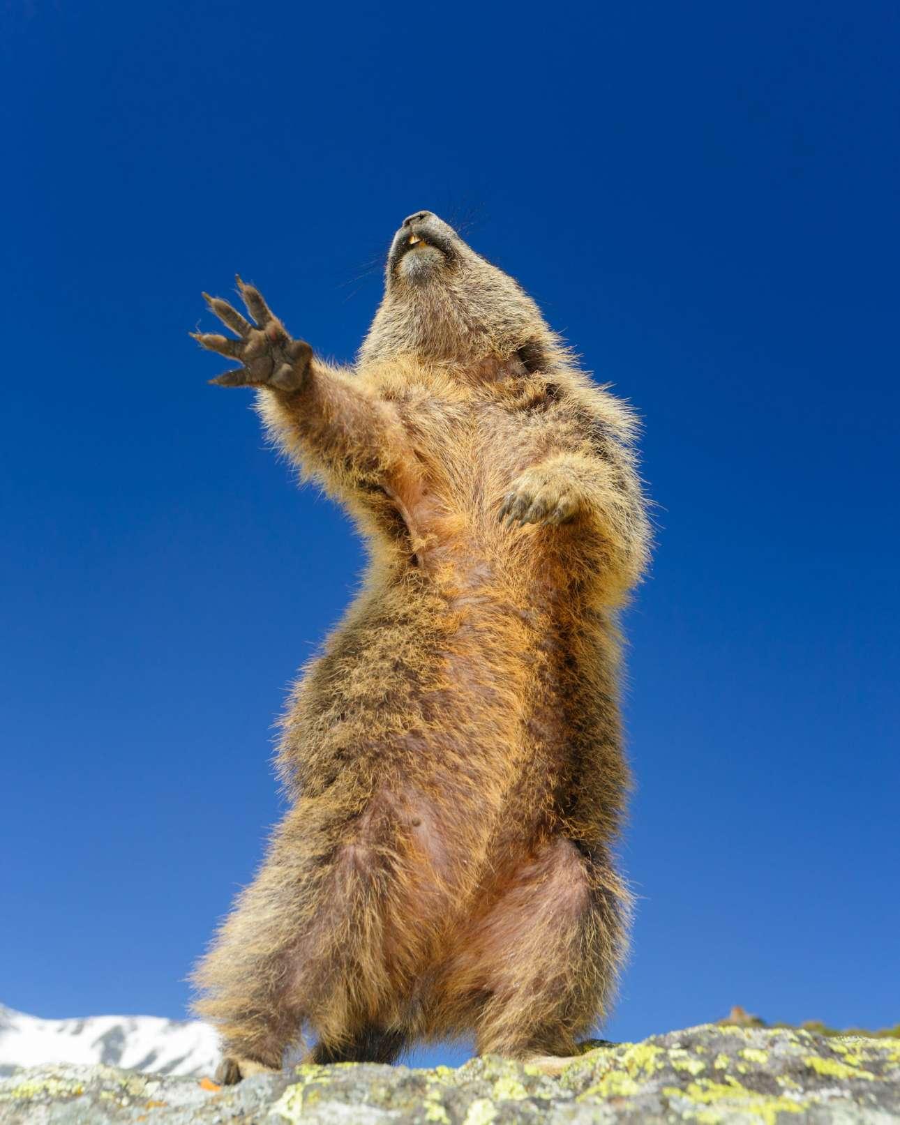 Σκίουρος σε εντυπωσιακές χορευτικές φιγούρες