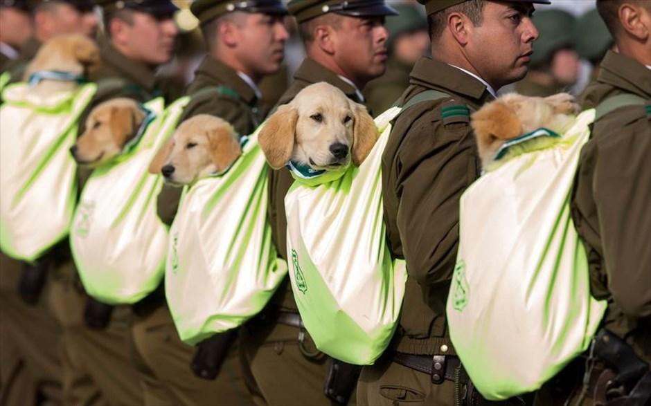 Ενα χαριτωμένο στιγμιότυπο από την Μεγάλη Στρατιωτική Παρέλαση στο Σαντιάγο της Χιλής