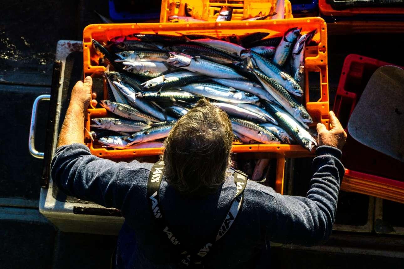 Ψαράς τοποθετεί μία κάσα γεμάτη σκουμπριά, στο λιμάνι Νιούλιν της Κορνουάλης. Η ασυνήθιστη λήψη -τραβηγμένη από ψηλά- κέρδισε τις εντυπώσεις και το μεγάλο βραβείο του διαγωνισμού