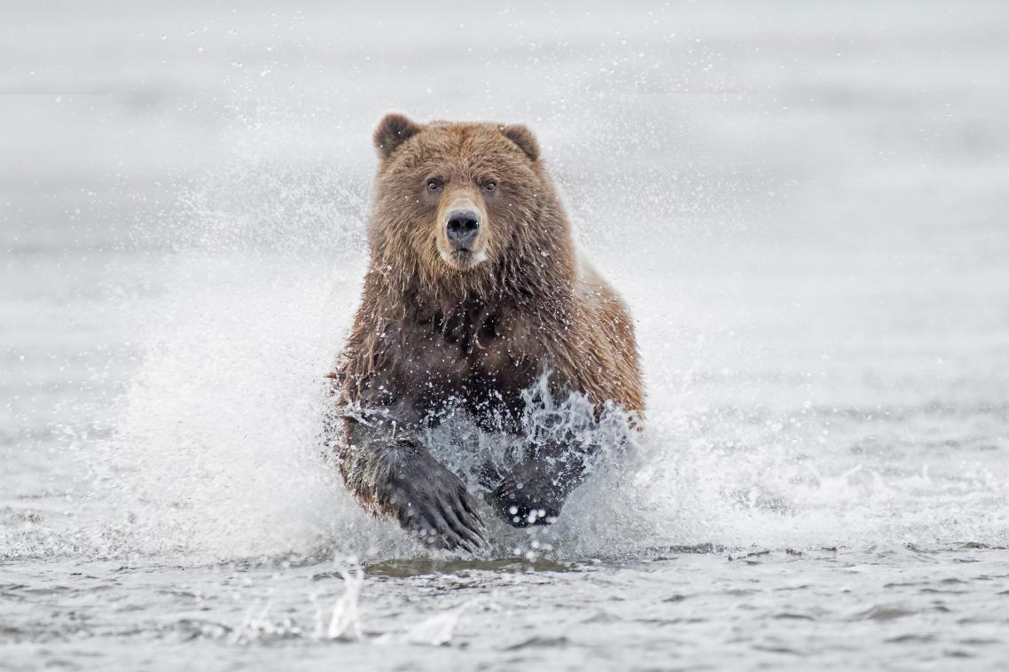Η φωτογραφία της άγριας καφέ αρκούδας στο Σάλμον Κρικ της Αλάσκας χάρισε τη νίκη στον Ρόμπιν Κλέιντον από το Χερτφορντσάιρ