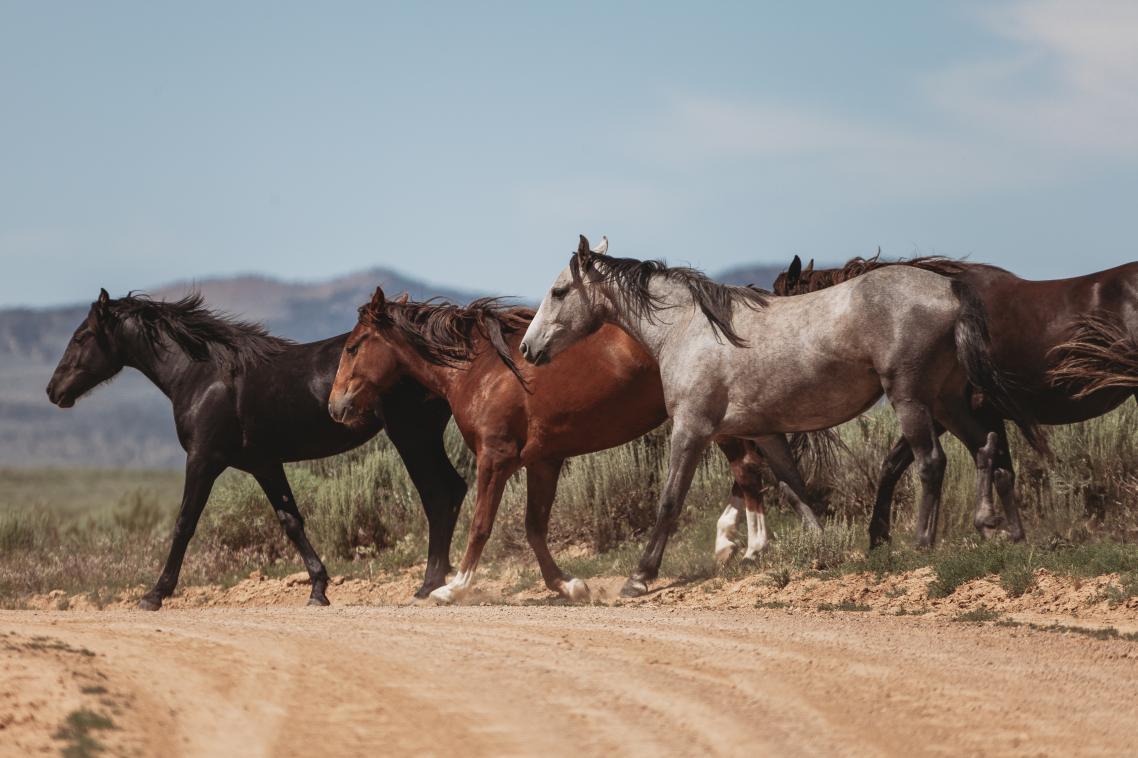 Αγρια άλογα στο Σαντ Γουός Μπέισιν του Κολοράντο