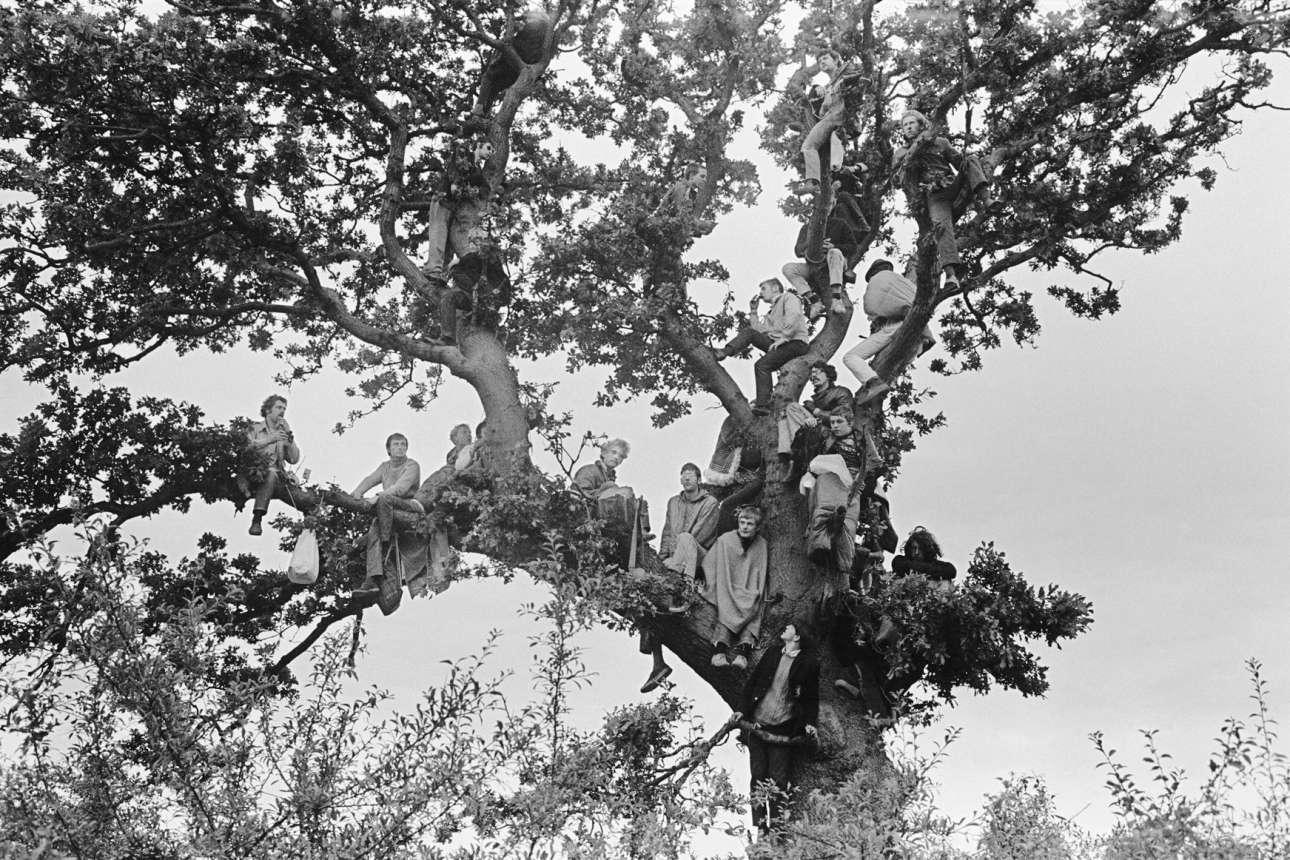 Για μια θέση.. στο δέντρο, στο διάσημο μουσικό φεστιβάλ του Isle of Wight, το 1968