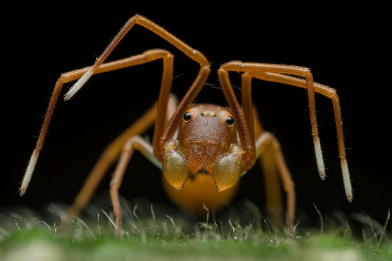 «Το πρόσωπο της εξαπάτησης» ονομάζεται η αράχνη που είναι έτοιμη να επιτεθεί, με τους αδένες της να ξεχειλίζουν από δηλητήριο. Πρώτο βραβείο στην κατηγορία «Πορτρέτα Ζώων»
