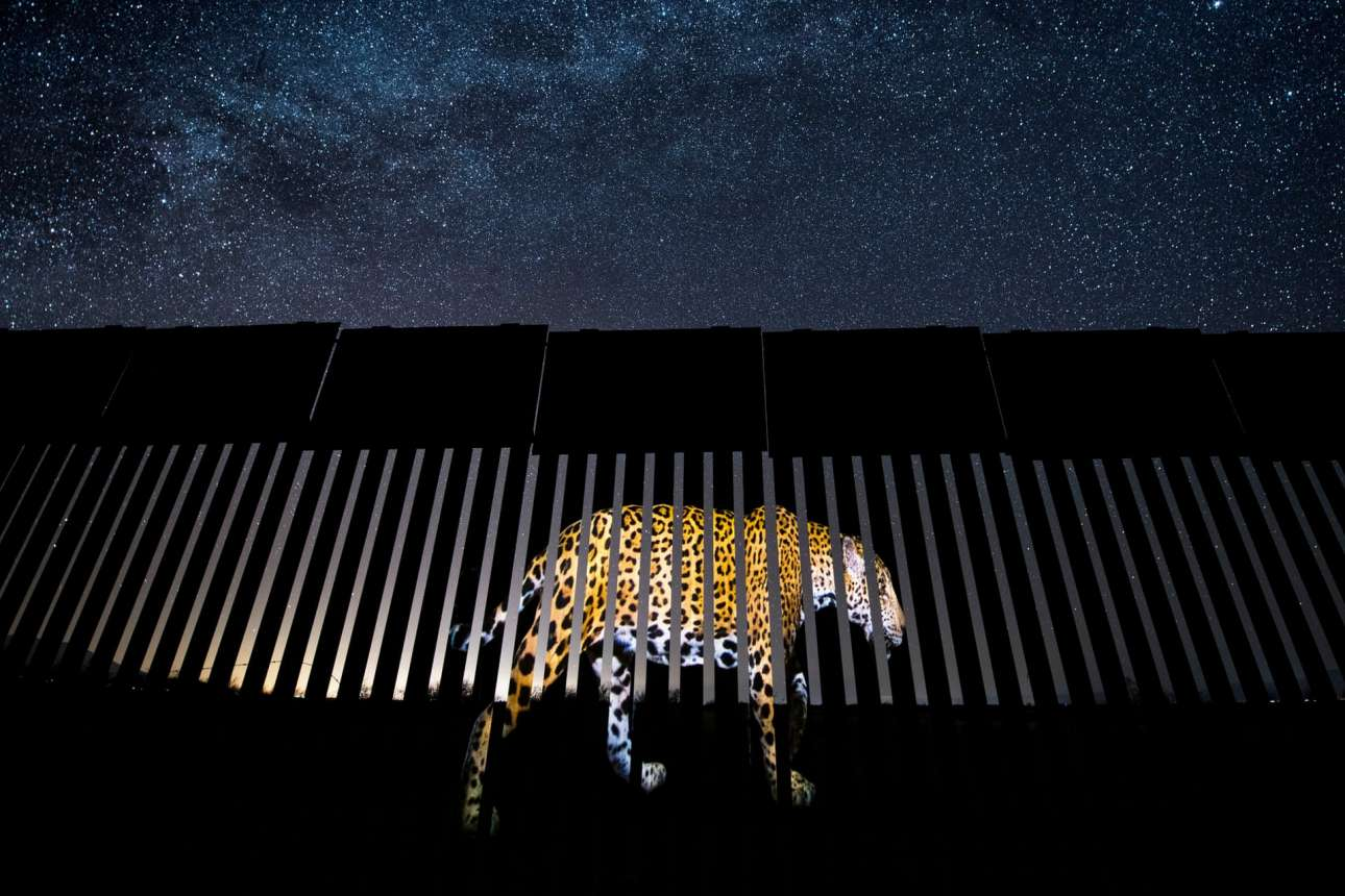 Η φωτογραφία «συλλαμβάνει» την εικόνα ενός τζάγκουαρ που προβάλλεται στον φράχτη των αμερικανομεξικανικών συνόρων και παίρνει βραβείο!
