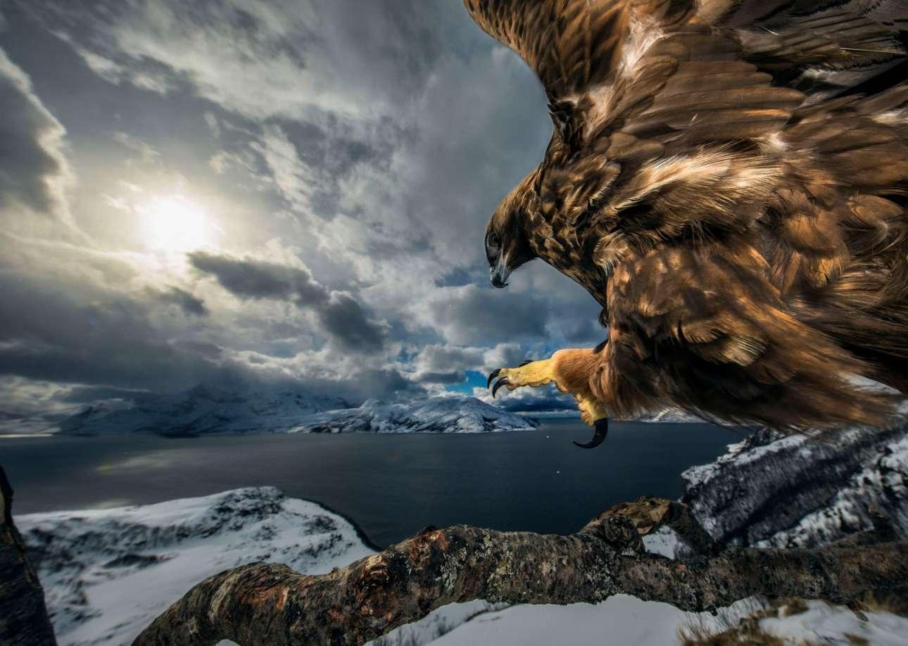 Το νικητήριο κλικ στην κατηγορία «Συμπεριφορά Πουλιών» βρήκε στο κάδρο του έναν χρυσό αετό στον αέρα της βόρειας Νορβηγίας