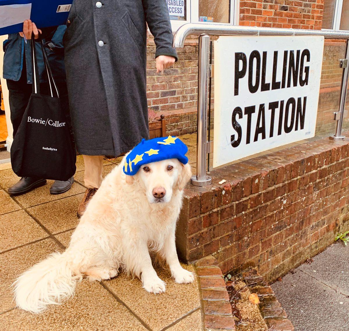 Ενας σκύλος κατά του Brexit έξω από εκλογικό τμήμα. Θα είναι από τους ηττημένους;