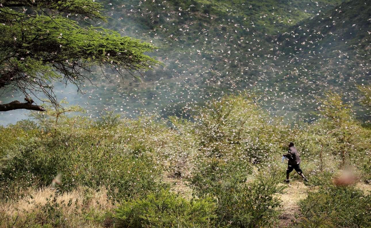 O αιθίοπας αγρότης και οι ακρίδες: η μάχη του ανθρώπου με το σμήνος των εντόμων, μήπως και σωθεί η σοδειά