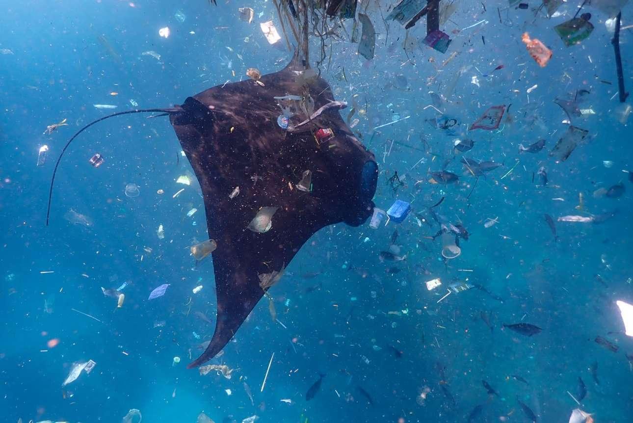 Τρίτη θέση στην κατηγορία Προστασία. Μία αποκαλυπτική στιγμή για τον φωτογράφο, καθώς παρακολουθούσε τα σαλάχια να προσπαθούν να ξεχωρίσουν το ζωοπλαγκτόν για να τραφούν, μέσα από μία «σούπα από πλαστικό» που επέπλεε κοντά στην επιφάνεια της θάλασσας του Μπαλί. Τα σκουπίδια, μαζί με το ζωοπλαγκτόν, καταλήγουν στη θάλασσα της Ινδονησίας από τα γύρω ποτάμια