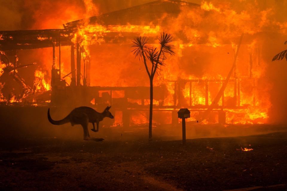 Ενα καγκουρό προσπαθεί να διαφύγει από τις φλόγες που κατακαίνε ένα σπίτι στην Κοντζόλα στη νότια ακτή της Νέας Νότιας Ουαλίας