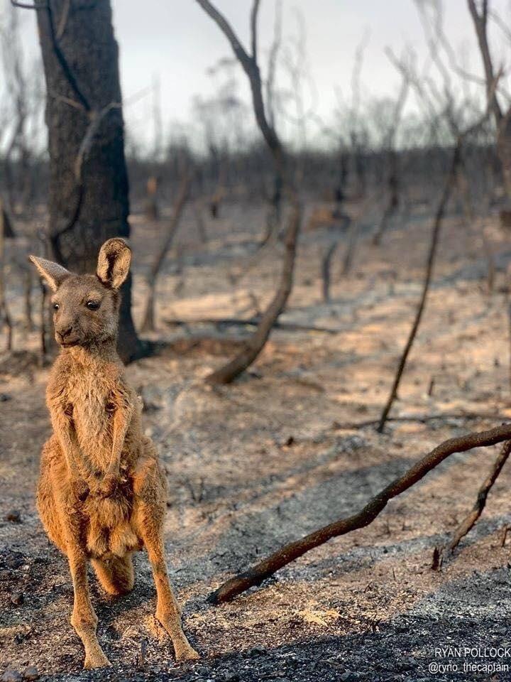 Μια συγκλονιστική φωτογραφία στο Εθνικό Πάρκο του Στέρλινγκ Ρέιντζ στη δυτική Αυστραλία