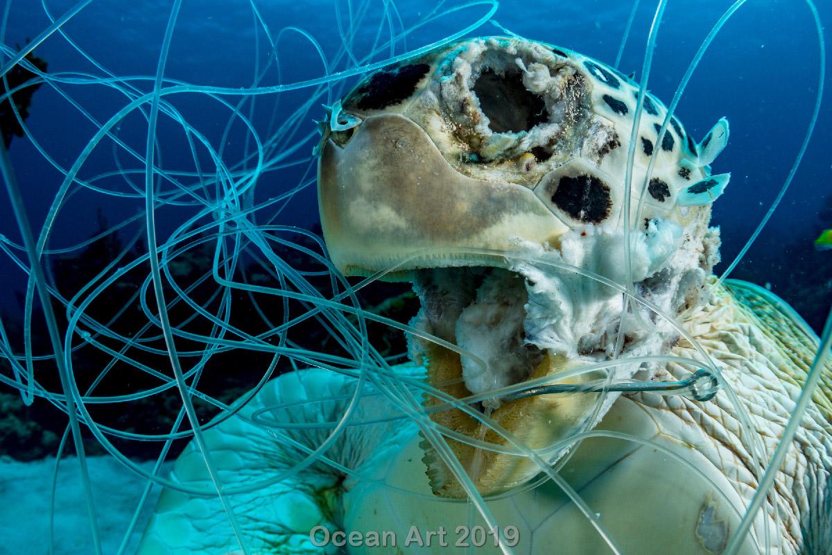 Πρώτη θέση στην κατηγορία Προστασία. Το κουφάρι μιας θαλάσσιας χελώνας εγκλωβισμένης σε πλαστικά δίχτυα, στις Μπαχάμες. Ο φωτογράφος Σέιν Γκρος ήθελε με αυτή την ανατριχιαστική του εικόνα να ευαισθητοποιήσει για το πρόβλημα της πλαστικής ρύπανσης και της αλιείας αυτού του είδους
