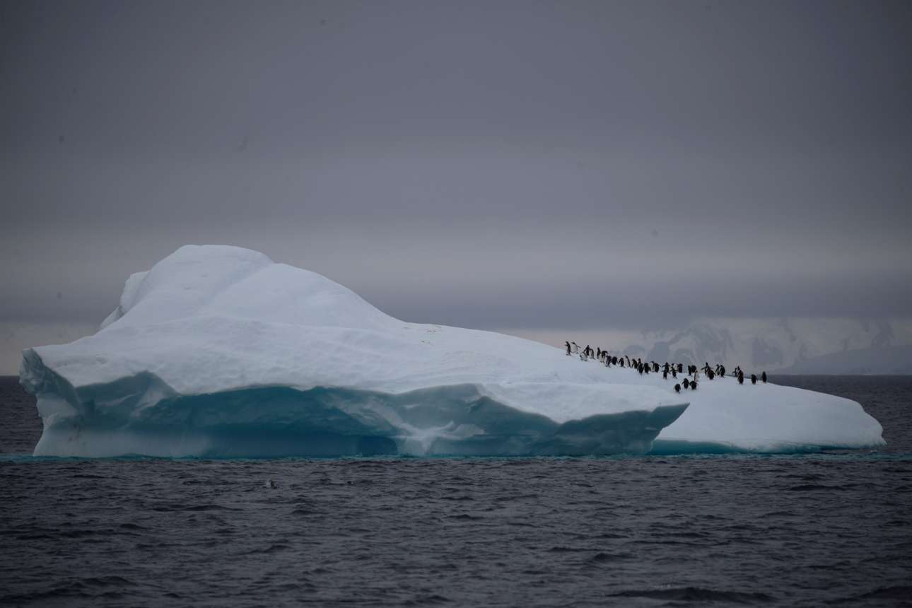 Μία ομάδα πιγκουίνων Chinstrap περπατάει πάνω σε ένα παγόβουνο που επιπλέει κοντά στο κανάλι Λεμέρ