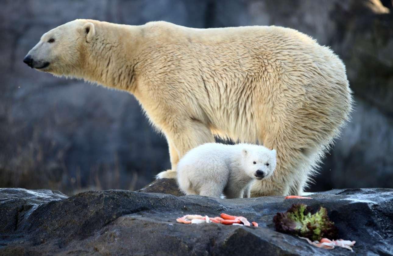Αυστρία: η πολική αρκούδα Νόρα και το «αβάφτιστο» αρκουδάκι της ποζάρουν στον ζωολογικό κήπο της Βιέννης