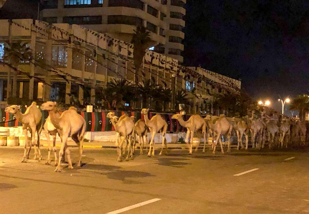 Λιβύη. Χιλιάδες καμήλες σε νυχτερινή «παρέλαση» σε λεωφόρο της Τρίπολης, καθ' οδόν προς τον ασφαλή προορισμό, μακριά από το λιμάνι όπου πέφτουν οι βόμβες του Χαφτάρ