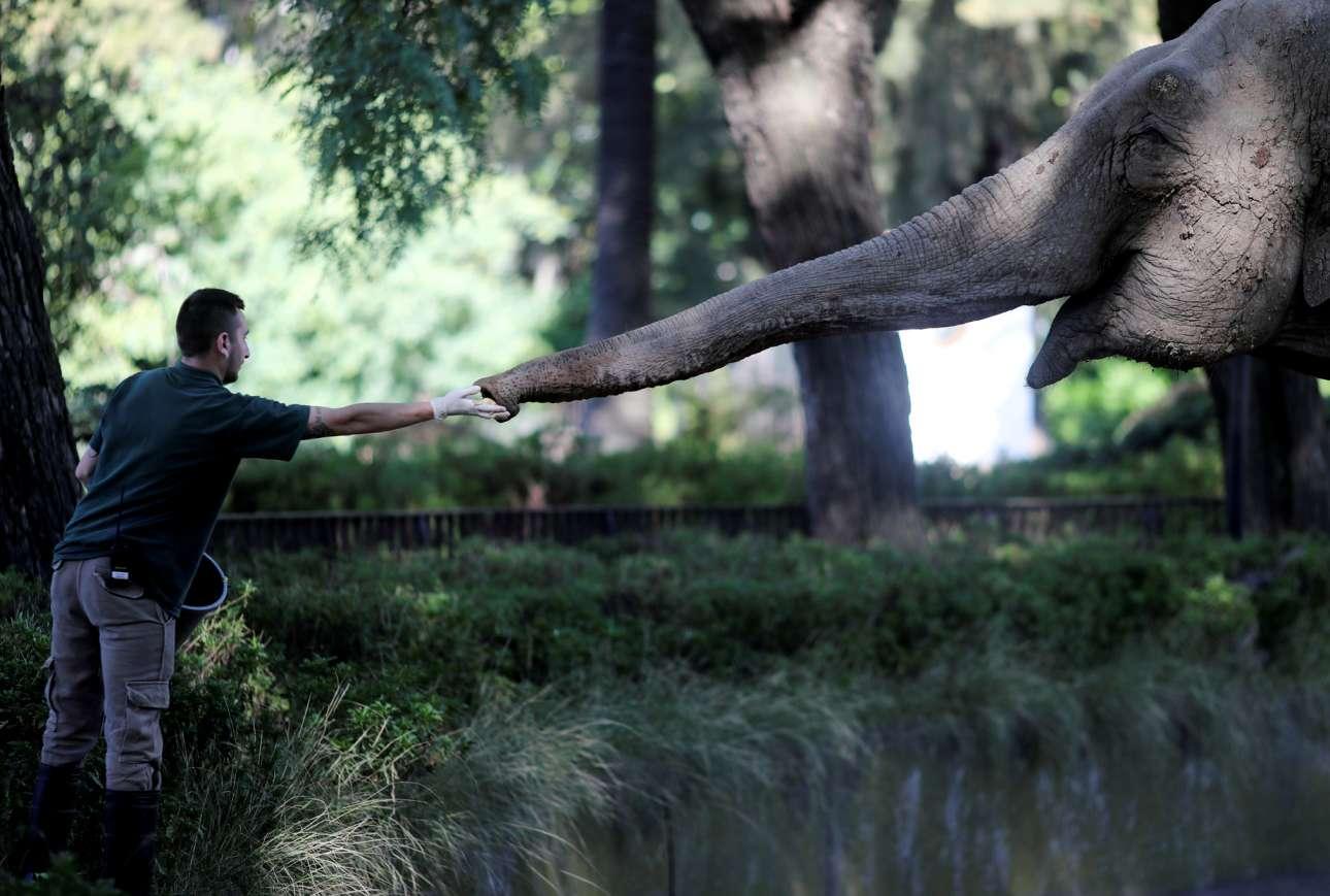 Αργεντινή. Ο καλός κτηνίατρος κερνάει μήλα τη μεσόκοπη ελεφαντίνα Μάρα στον ζωολογικό κήπο του Μπουένος Αϊρες