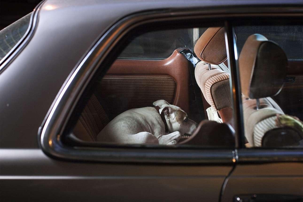 Σκυλιά συναντούσε στις βόλτες με τον δικό του σκύλο, συνήθως σε πάρκα, και, όπως λέει ο ίδιος, οι περισσότεροι ιδιοκτήτες δέχονταν αμέσως. Στη φωτογραφία, ο Μπόουνς