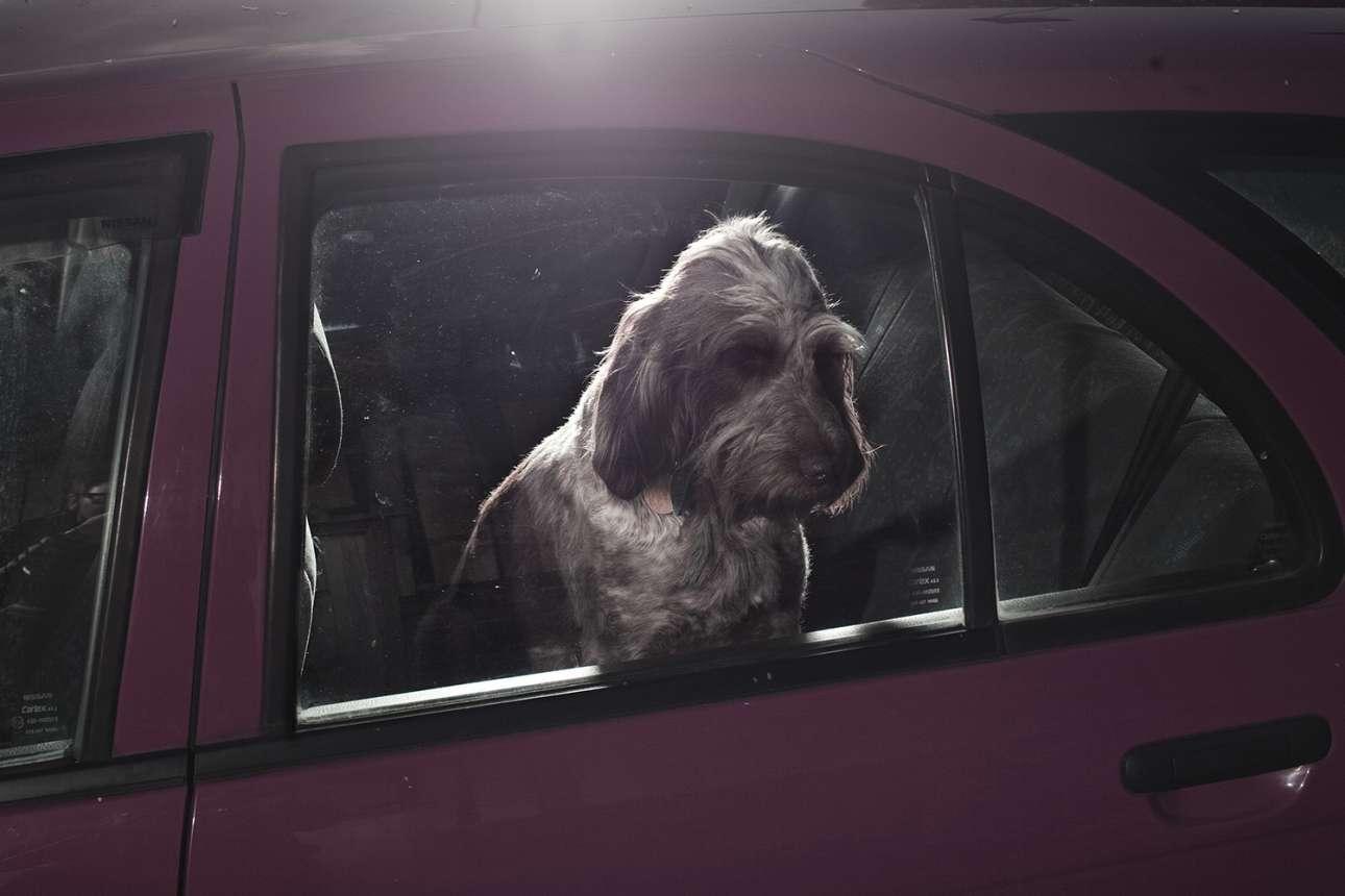 Ο απελπισμένος Λότι. Ο Ασμπορν παραδέχεται ότι το να δουλεύει με σκύλους είναι πιο ξεκάθαρο, καθώς έχουν μια «ωμή ειλικρίνεια, δεν αυτολογοκρίνονται και δείχνουν γρήγορα τα αληθινά τους συναισθήματα»
