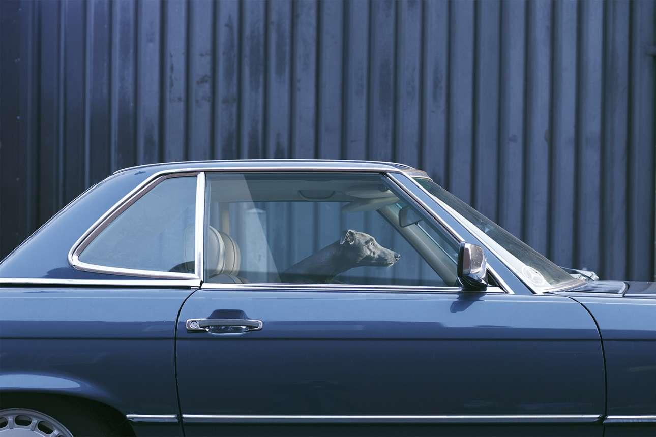 O Μάους ως ένας σύγχρονος, σκυλίσιος «Σοφέρ της κυρίας Ντέζι»