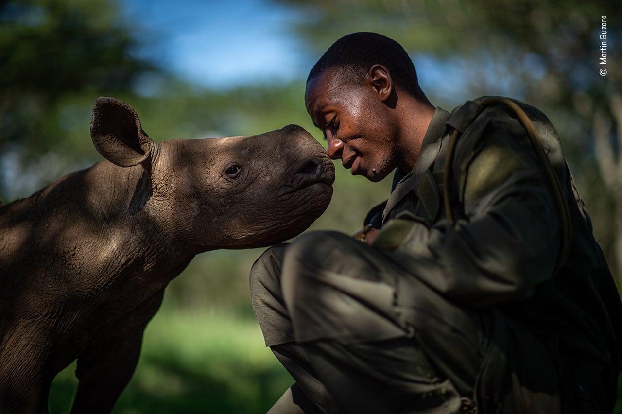 Το μωρό και η νταντά του. O Μάρτιν Μπουζόρα από τον Καναδά κατέγραψε μια τρυφερή στιγμή ανάμεσα σε ένα ρινόκερο βρεφικής ηλικίας και τον άνθρωπο που τον φροντίζει στο πάρκο Lewa Wildlife Conservancy στη Βόρεια Κένυα, όπου ζουν διάφορα είδη ζώων που κινδυνεύουν από εξαφάνιση, όπως αυτό στο οποίο ανήκει ο ρινόκερος της φωτογραφίας