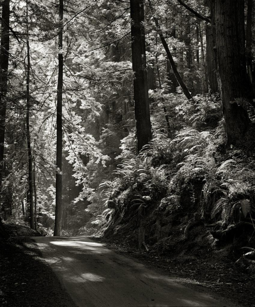Ασπρόμαυρη βόλτα στο πάρκο Μπουτάνο της Καλιφόρνιας