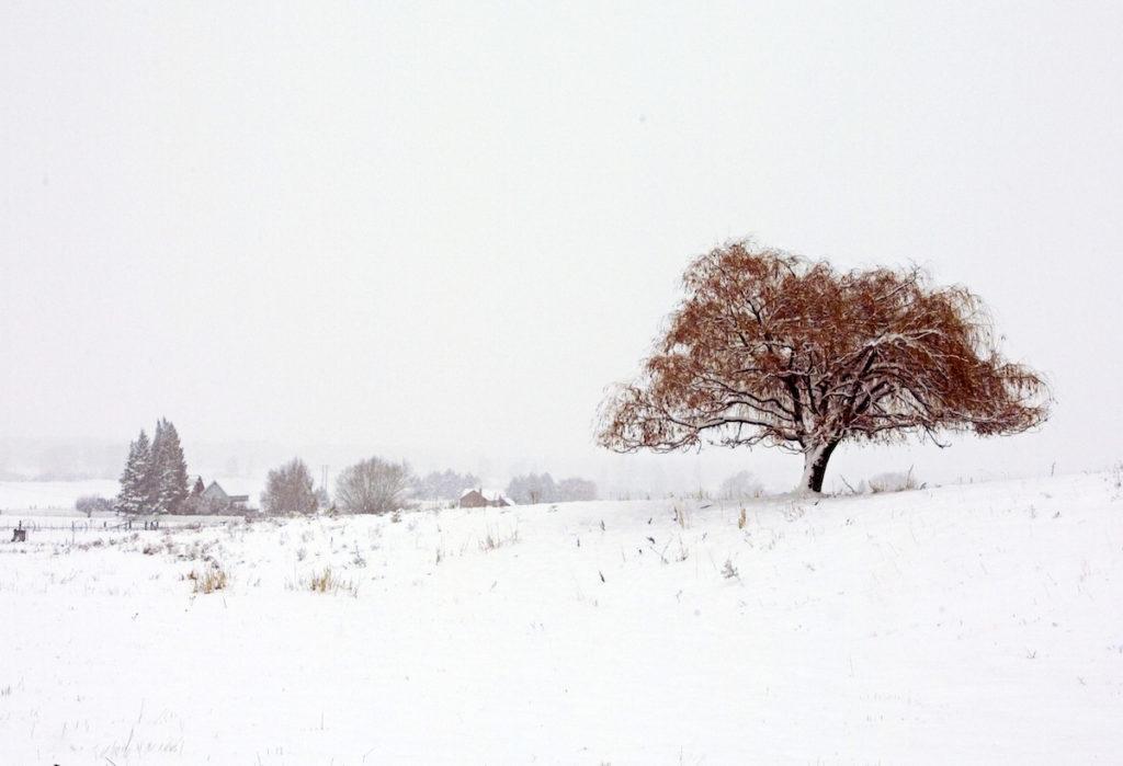«Ενα δέντρο»: η αμερικανική, χειμωνιάτικη ύπαιθρος σε ένα ατμοσφαιρικό καρέ
