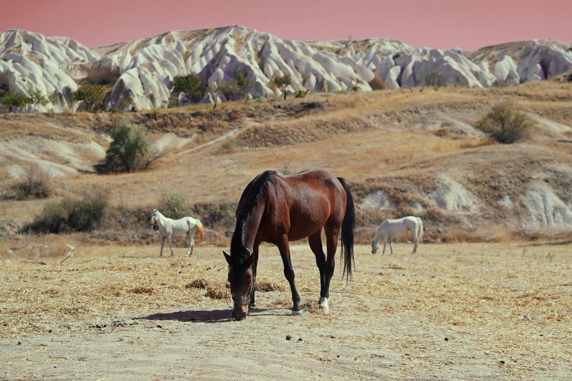 Αλογα βόσκουν στην Καππαδοκία, στην Τουρκία