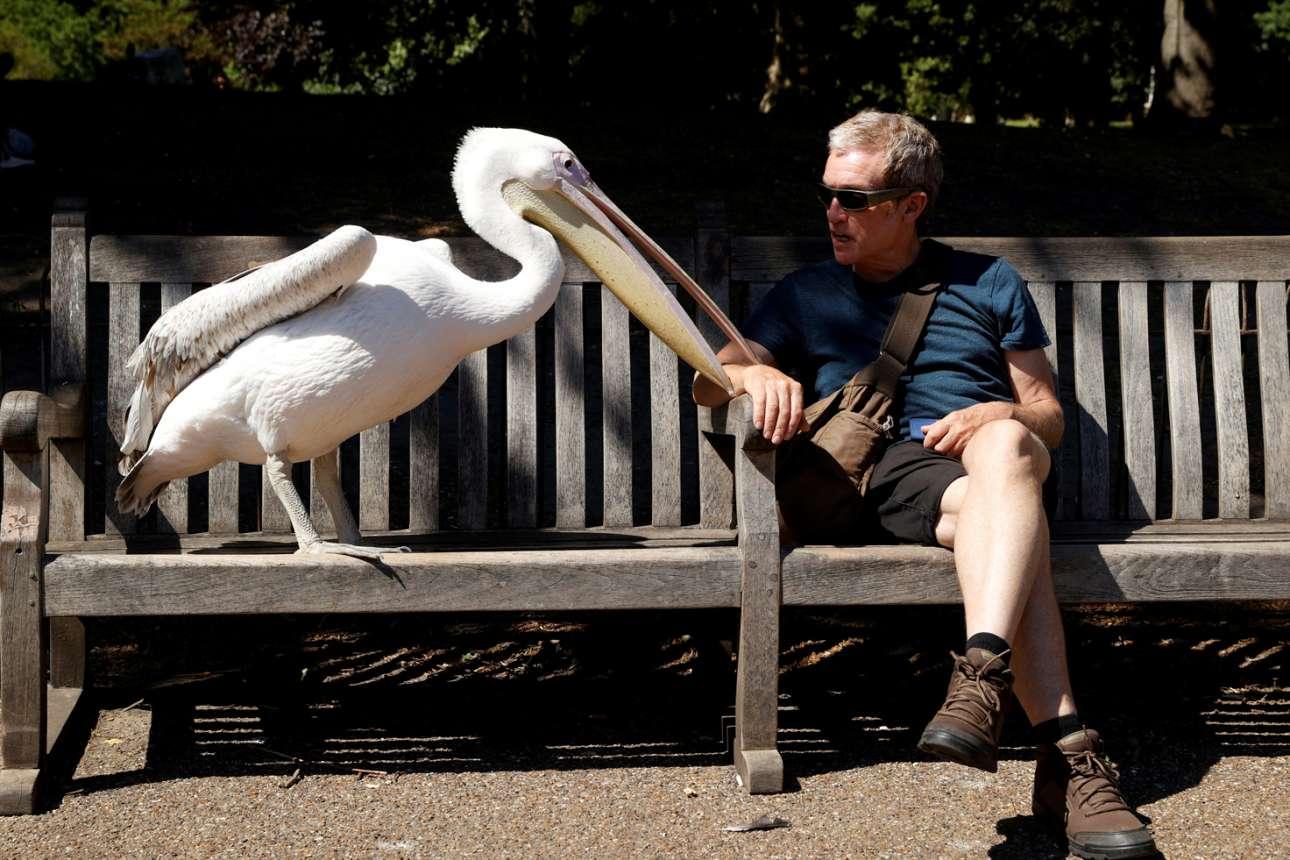 Πάρκο Σέντ Τζέιμς, Λονδίνο. Ψιλοκουβεντούλα μεταξύ αγνώστων, χωρίς αποστάσεις ασφαλείας. Πες μου, παππού, αυτός ο κόσμος πάει πού; Και του δικού σου του σκοπού μάθε μου την αξία