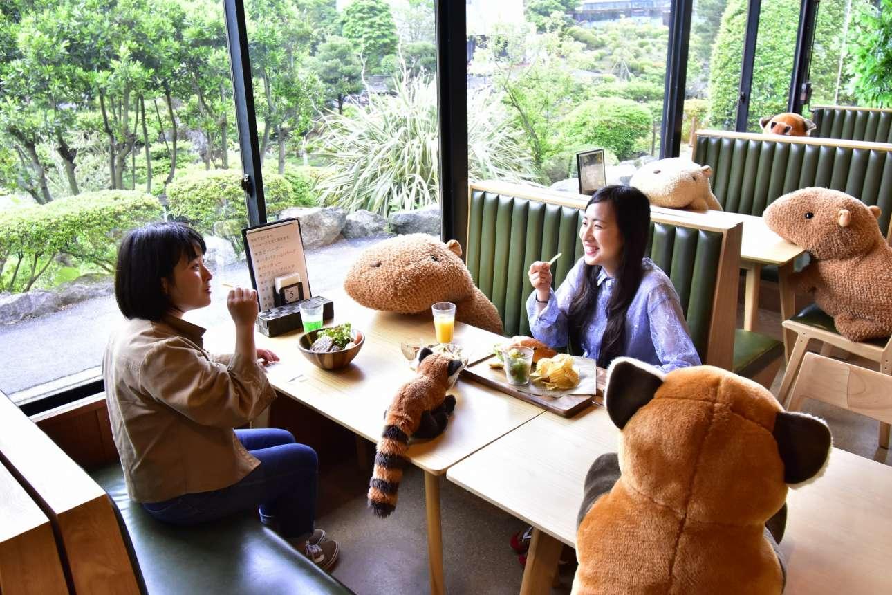 Λούτρινα ζωάκια κρατούν συντροφιά στις δύο φίλες καθώς γευματίζουν στο εστιατόριο του ζωολογικού κήπου Izu Shaboten στην πόλη Σιζουόκα της Ιαπωνίας