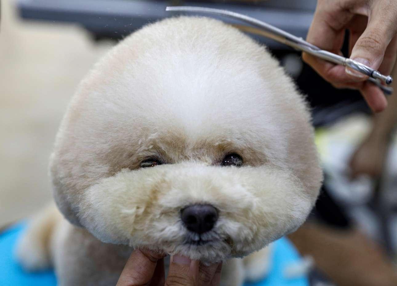 Αν δεν είσαι ανώνυμος και αυτεξούσιος αλητόσκυλος αλλά Maltese Poodle με τ' όνομα, αυτά παθαίνεις. Μην κλάψεις, δεν σε λυπάται κανένας στη Σιγκαπούρη