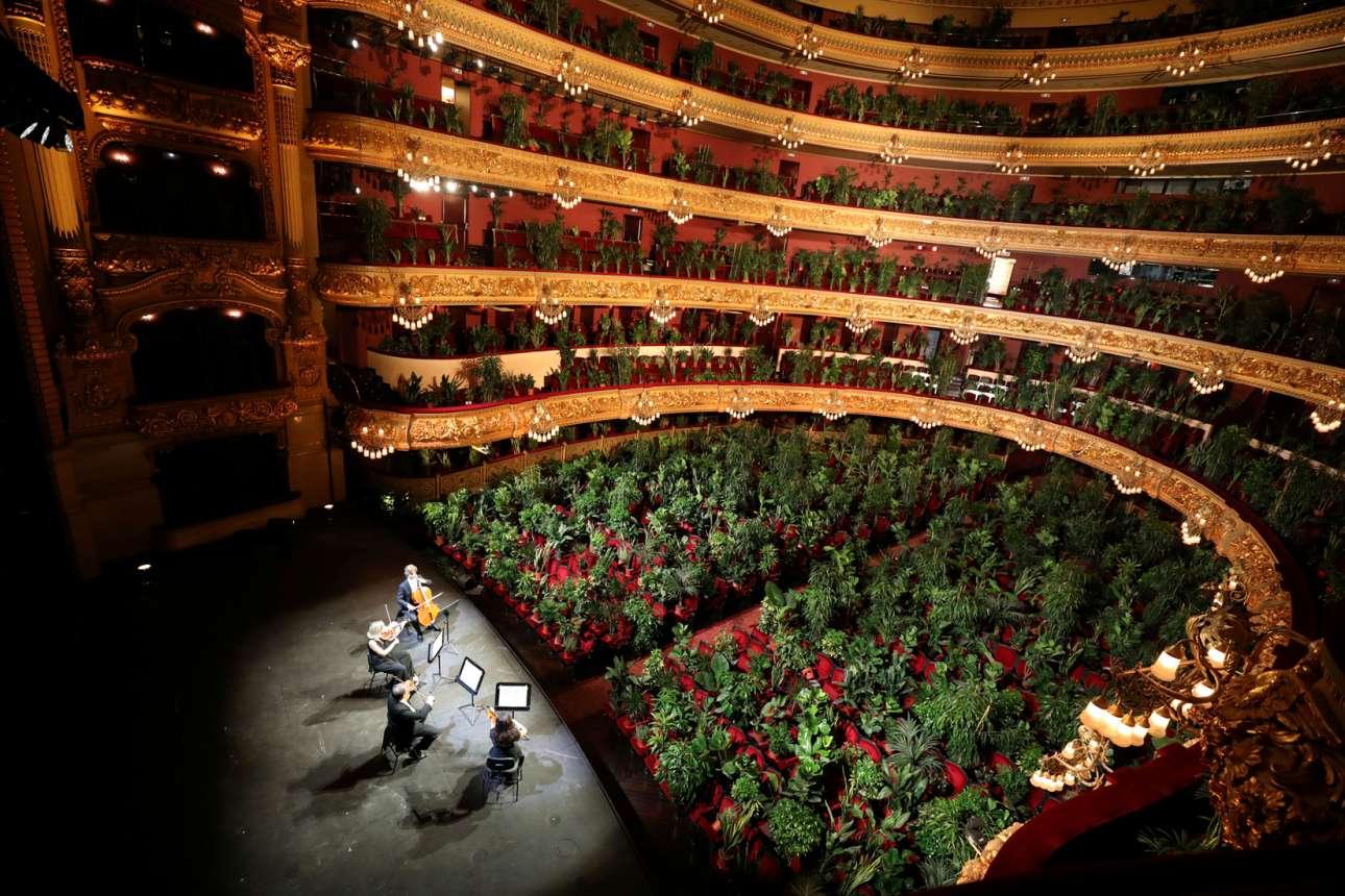 Ο κήπος όχι μόνο βλέπει, αλλά και ακούει. Φυτά έχουν αντικαταστήσει τους ανθρώπους, παντού στην πλατεία και στα θεωρεία της Οπερας της Βαρκελώνης, και πρασινίζουν με τις νότες του κουαρτέτου εγχόρδων: όχι φωτοσύνθεση, αλλά ηχοσύνθεση