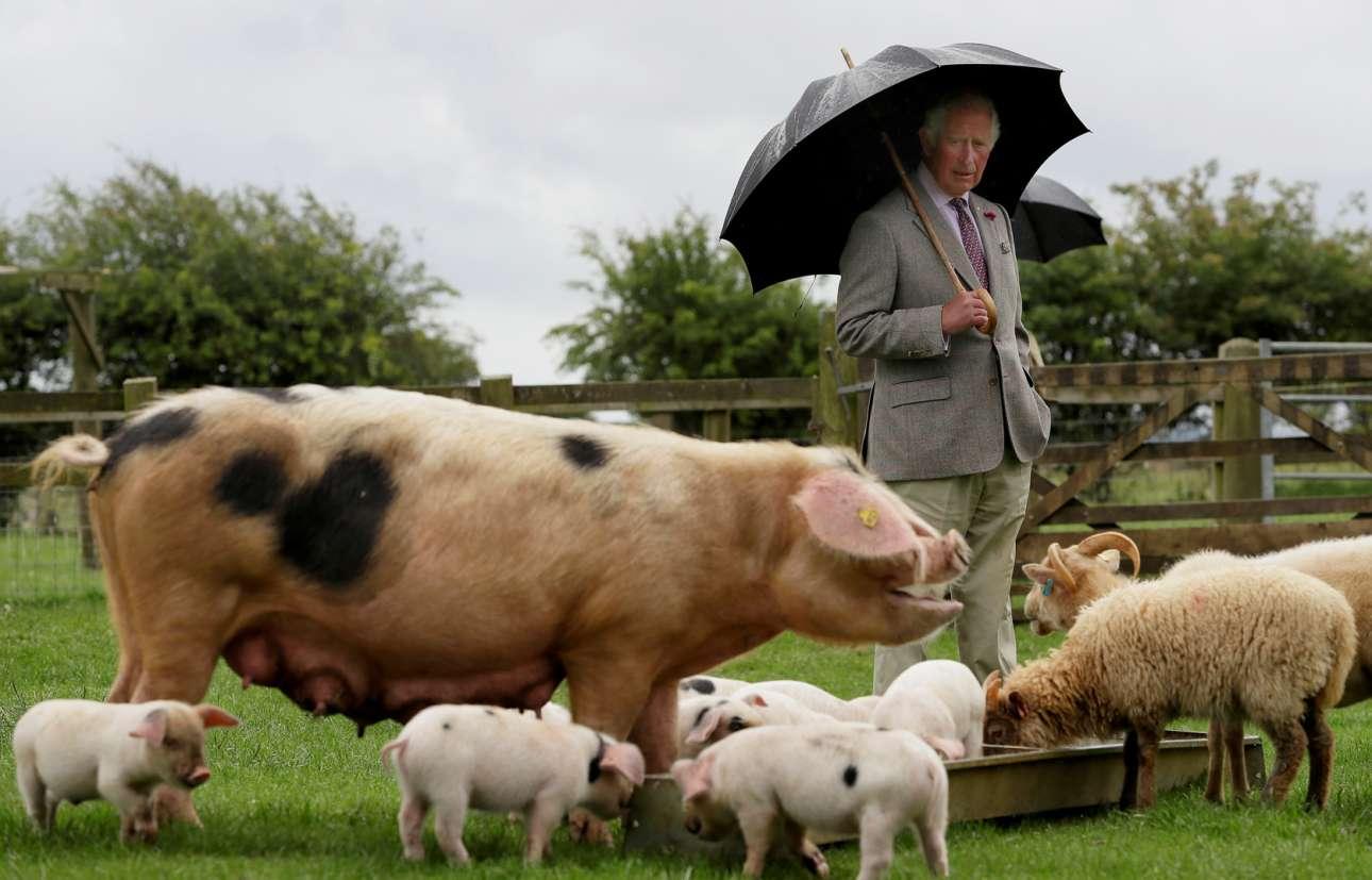 Ο πρίγκιπας της Ουαλίας Κάρολος και η ομπρέλα του απαθανατίζονται με τον βασιλικότερο (ταπεινότερο) τρόπο: δίπλα στη χοιρομητέρα με τα μωρά της και σε αιγοπρόβατα