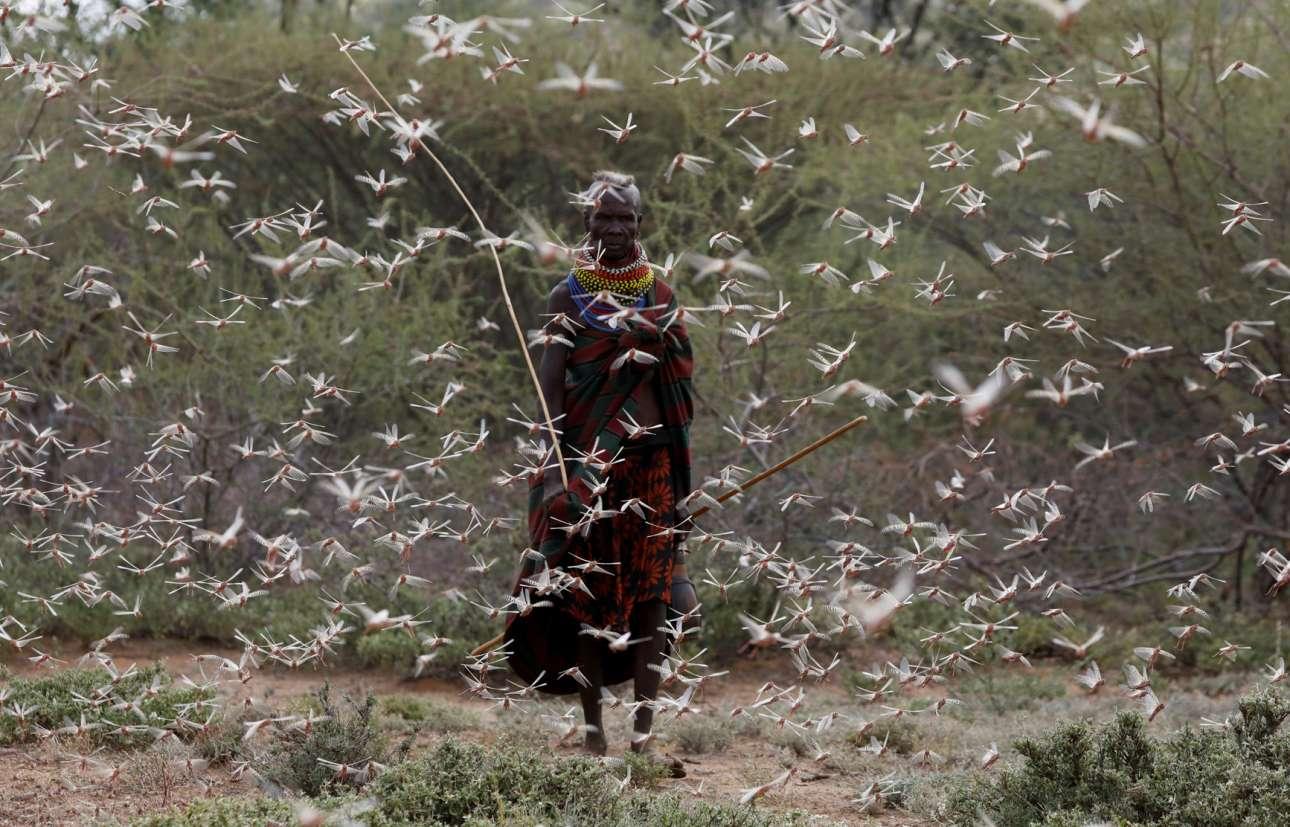 Οι επιδρομές των ακρίδων της ερήμου είναι πολύ συχνό φαινόμενο στην Ανατολική Αφρική. Το κακό για τα σπαρτά των χωριών είναι μεγάλο, όμως για τον φακό η εικόνα είναι ποιητική