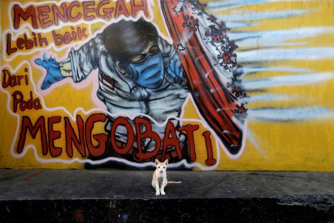 Καθώς ο κόσμος ετοιμάζεται για το δεύτερο κύμα του κορονοϊού –λες και το πρώτο κόπασε– και ένα γκράφιτι σε τοίχο της Τζακάρτα στην Ινδονησία καλεί τους νέους να λάβουν μέτρα προστασίας, μια γατούλα ποζάρει στον φακό