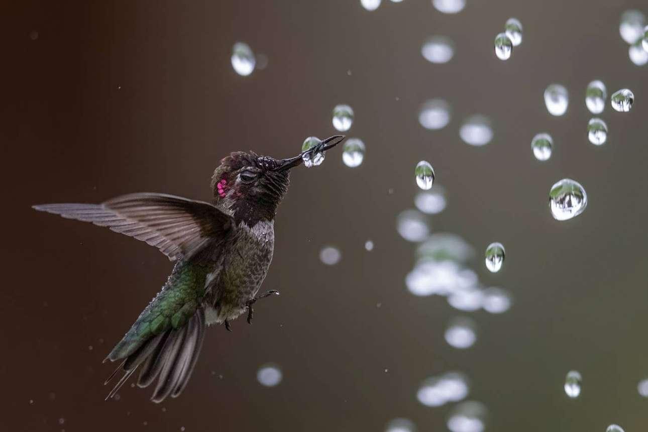 Ενα κολίβριο φτερουγίζει στον αέρα περιτριγυρισμένο από μεμονωμένα σταγονίδια νερού σε μία παραμυθένια λήψη