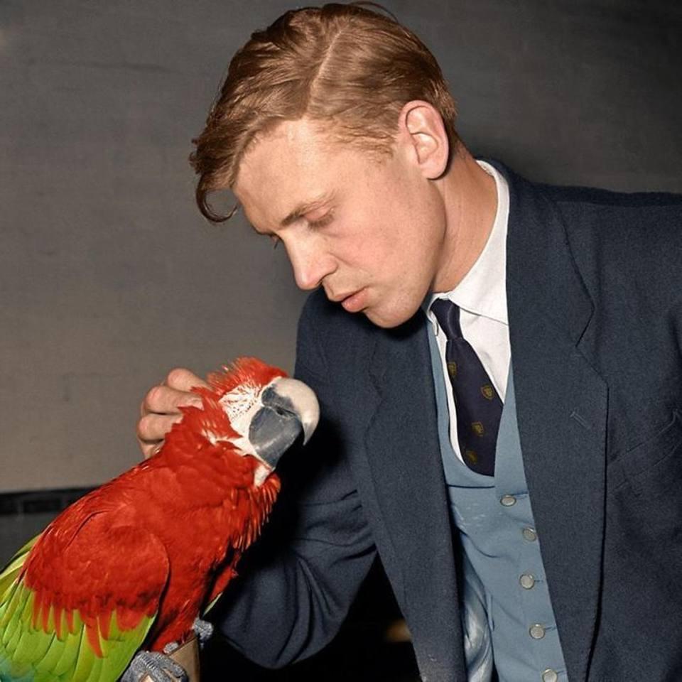 Ο θρυλικός βρετανός φυσιοδίφης Ντέιβιντ Ατένμπορο, σε νεαρή ηλικία, τη δεκαετία του 50, αγκαλιά με έναν παπαγάλο