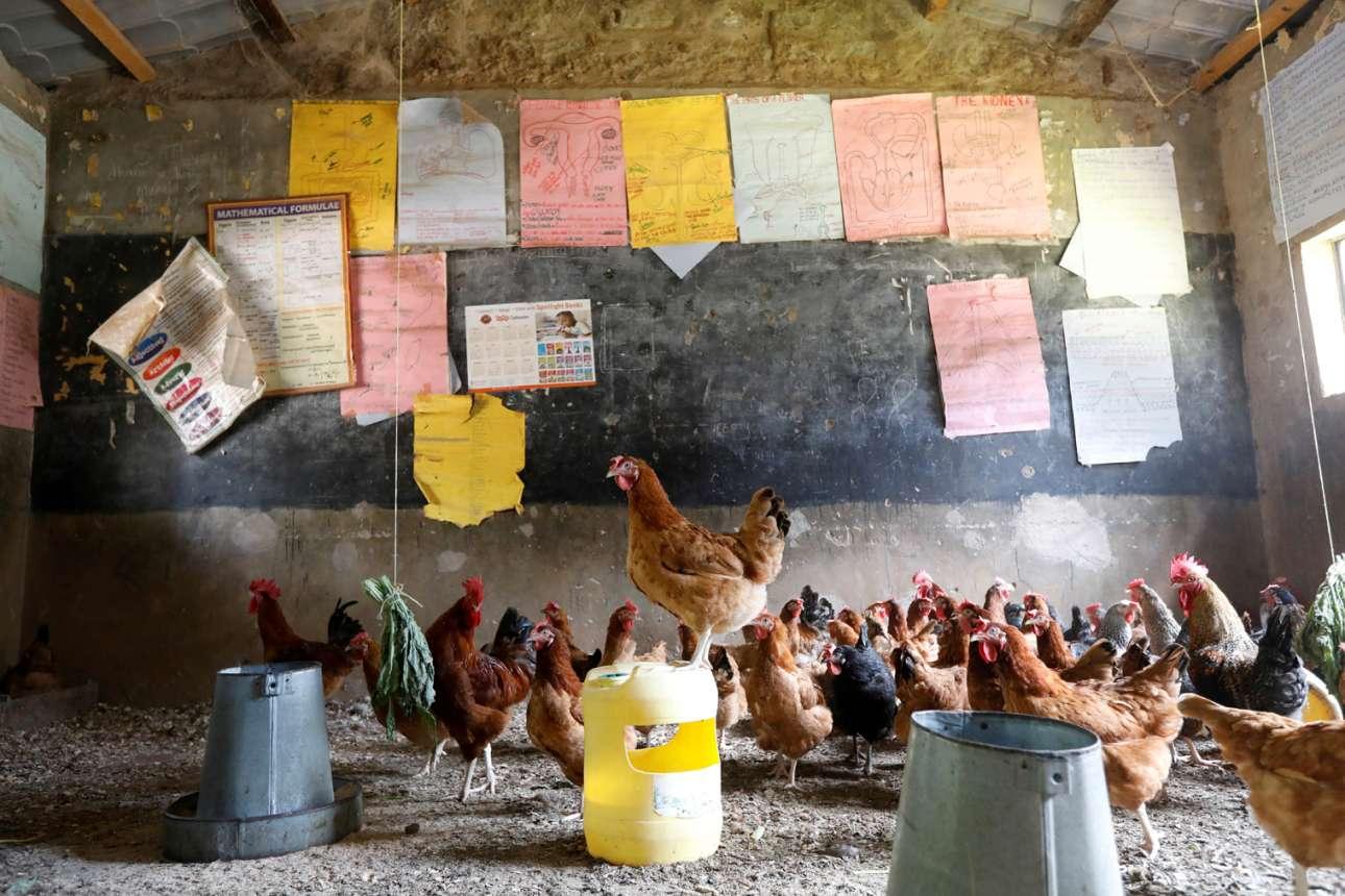Φτώχεια σουβλερή, μέχρι το κόκαλο. Το πρακτορείο που διακινεί αυτή τη φωτογραφία από την Κένυα λέει ότι η χαμοκέλα ήταν κάποτε σχολείο και ότι εξαιτίας της πανδημίας του κορονοϊού οι μαθητές τα μάζεψαν και έφυγαν και έτσι κατέλαβαν τον χώρο οι κότες. Μακάρι τα παιδάκια να τρώνε κάνα αυγό, τουλάχιστον